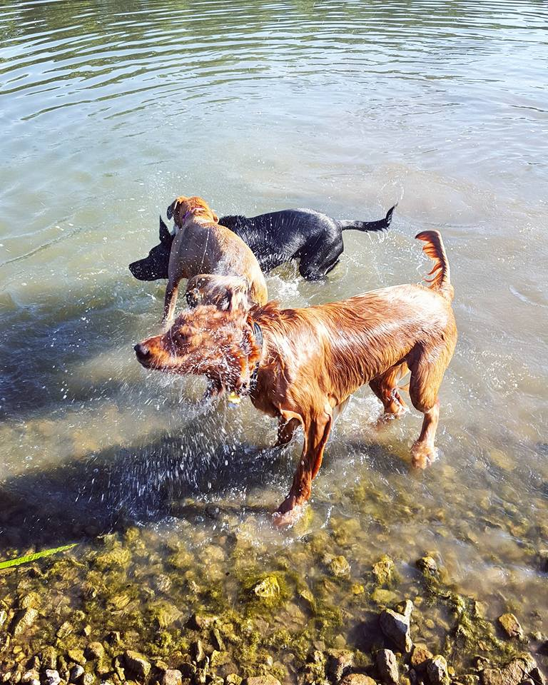 dogs shaking off water at twin lakes dog park