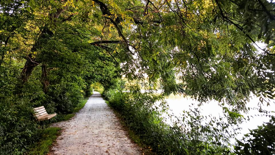 gravel trail with green trees and a bench