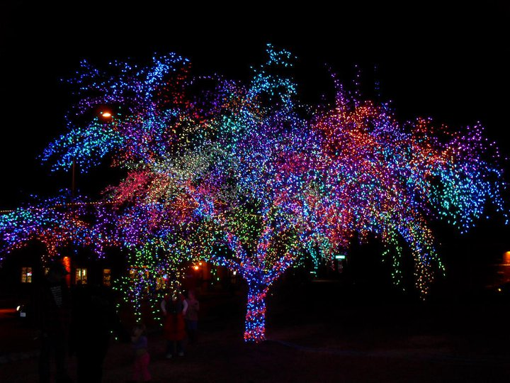 Magic Tree 2010